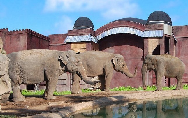 2-Х КОМНАТНЫЕ ХИЖИНЫ POLYNESIAN ELEPHANTS OBSERVATORY Magic Natura Animal, Waterpark & Polynesian Resort Бенидорме