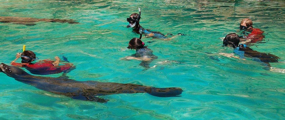 Encounter + Snorkeling with Sea Lions at Animal Magic Natura, Waterpark Magic Natura Animal, Waterpark Resort Бенидорме
